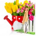 конкурс «Самый лучший цветник»